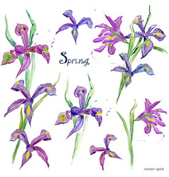 Spring flowers collection watercolor purple iris vector
