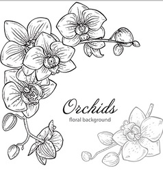 Beautiful monochrome floral background with orchid vector