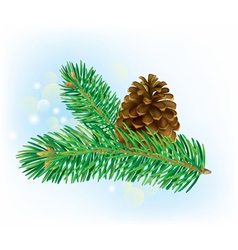 Branch of spruce with pine cone vector