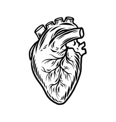human heart organ icon hand drawn style vector image