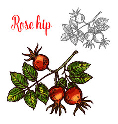 Rose hip sketch fruit berry icon vector