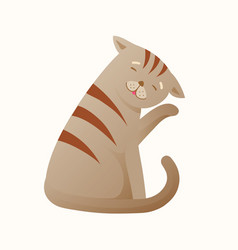 Grey cat sitting alone cleaning itself fun vector