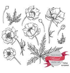 Set of graphic spring flowers trollius vector