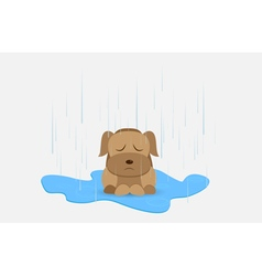 Homeless dog vector image