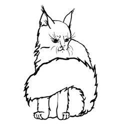 Contour cat portrait vector image