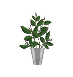 bonsai house plant realistic icon for interior vector image
