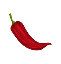 Flat icon of red spicy pepper fresh vector