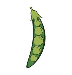 Peas fresh vgetable vector