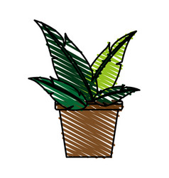Plant in pot vector