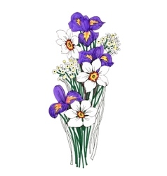 Painted bouquet of narcissuses and irises flowers vector