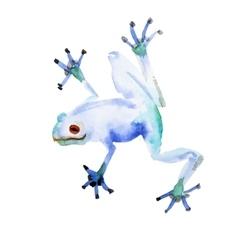 Watercolor hand drawn frog vector