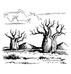 australia landscape with baobab trees vector image