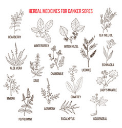 Best herbal remedies for canker sores vector