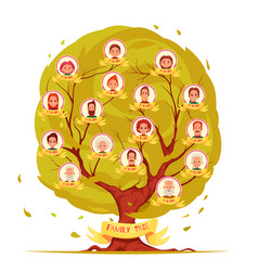 family members genealogical tree set vector image