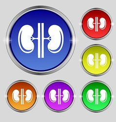 Kidneys icon sign Round symbol on bright colourful vector image