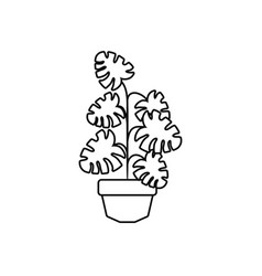 potted monstera palm plants line style icon vector image