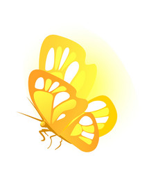 butterfly with golden wings isolated on white vector image