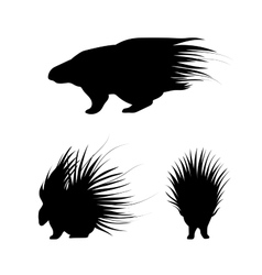 Porcupine silhouettes vector image vector image