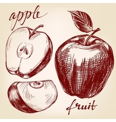 apple fruit set hand drawn llustration vector image