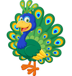 Beautiful chicken peacock on white background vector