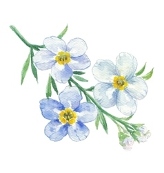 Branch of blue forget-me-not vector