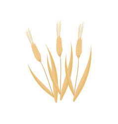 cartoon flat icon of three dry wheat vector image