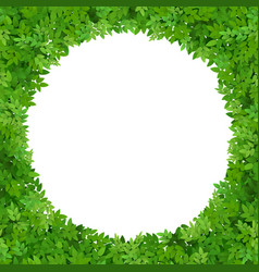 circular frame of green leaves vector image