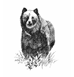 Grizzly bear animal hand drawn sketch vector
