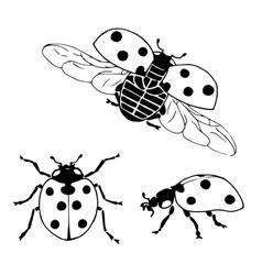Ladybug set1 vector