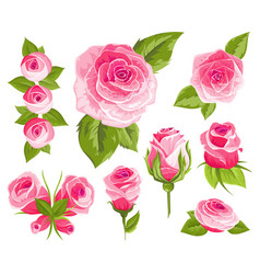 vintage flowers set pink roses and buds wedding vector image
