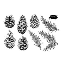 Pine cone and fir tree set Botanical hand drawn vector image