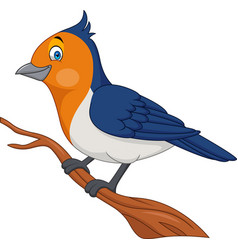 Cartoon bird on a tree branch vector
