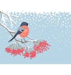 winter snowy card with bullfinch on branch of vector image
