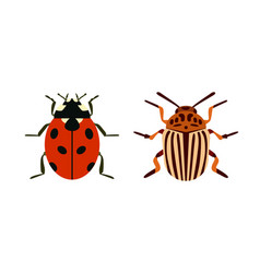 insect icon flat isolated nature flying bugs vector image