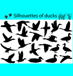 Silhouettes of ducks vector