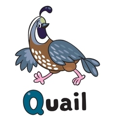Little quail for abc alphabet q vector