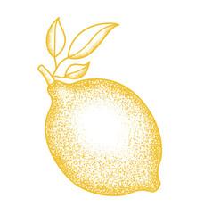 citrus fruits sketch vector image