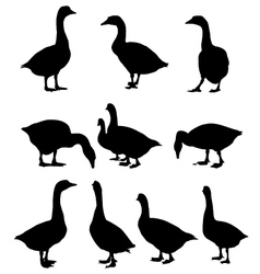 Ducks vector image