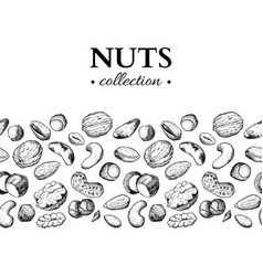 Nuts vintage hand drawn vector