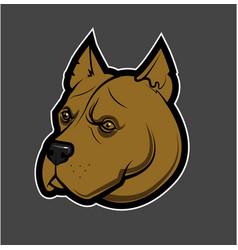Pitbull head image vector