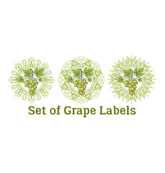 set of grape labels vector image