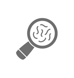 Bacteria under magnifying glass grey icon vector