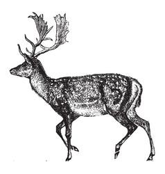 Deer vintage vector