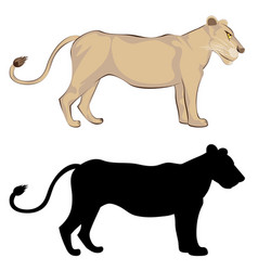 Lioness with silhouette vector