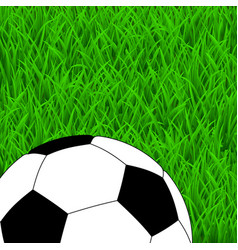 soccer ball on green grass vector image