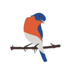 stylized oriole bird on a tree branch flat vector image