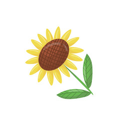 cartoon icon of beautiful sunflower with green vector image vector image