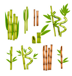 Bamboo realistic set vector
