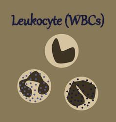 Human organ icon in flat style leukocyte vector