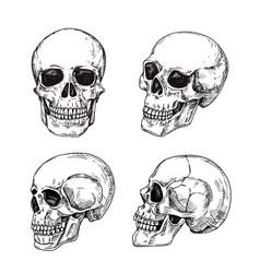human skull hand drawn skulls sketch vintage vector image